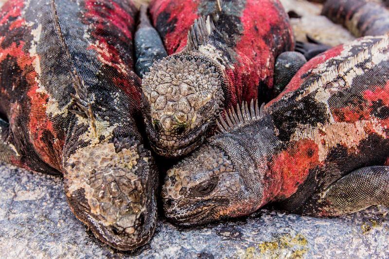 Seasonal Wildlife Highlights