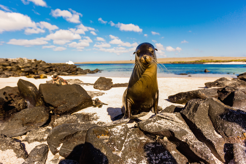 who discovered galapagos islands