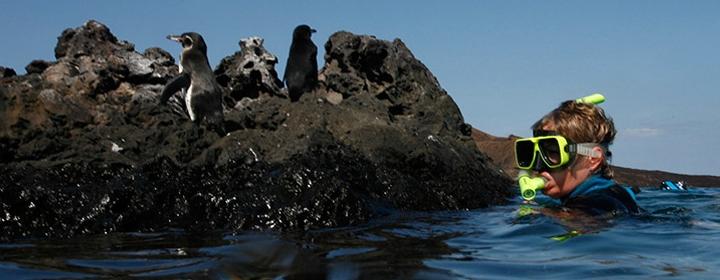 Evolution Galapagos Cruise Tour