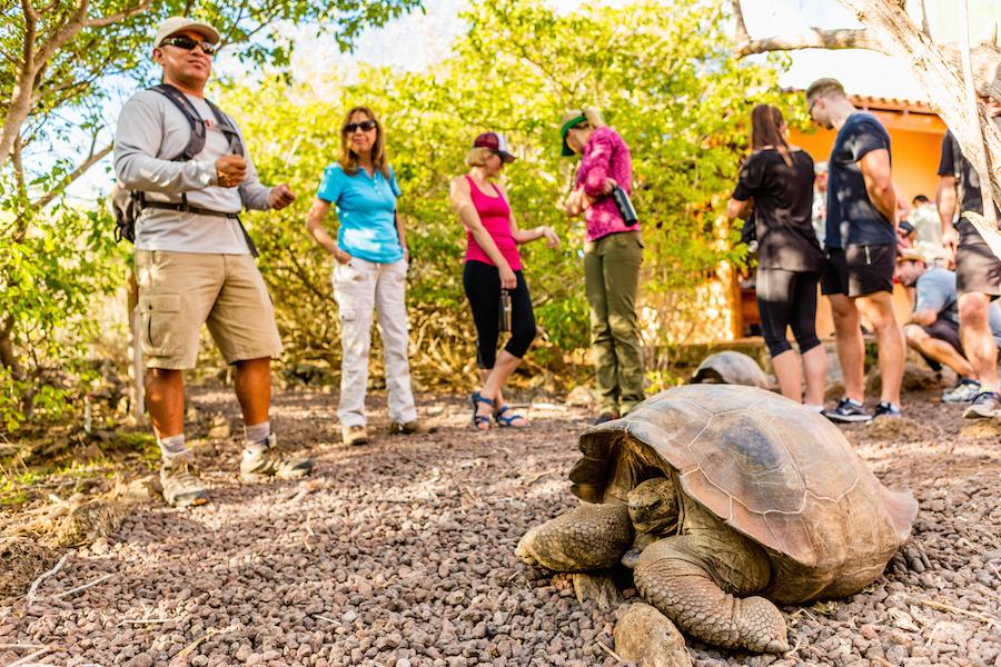Galapagos Tortoise Fatcs