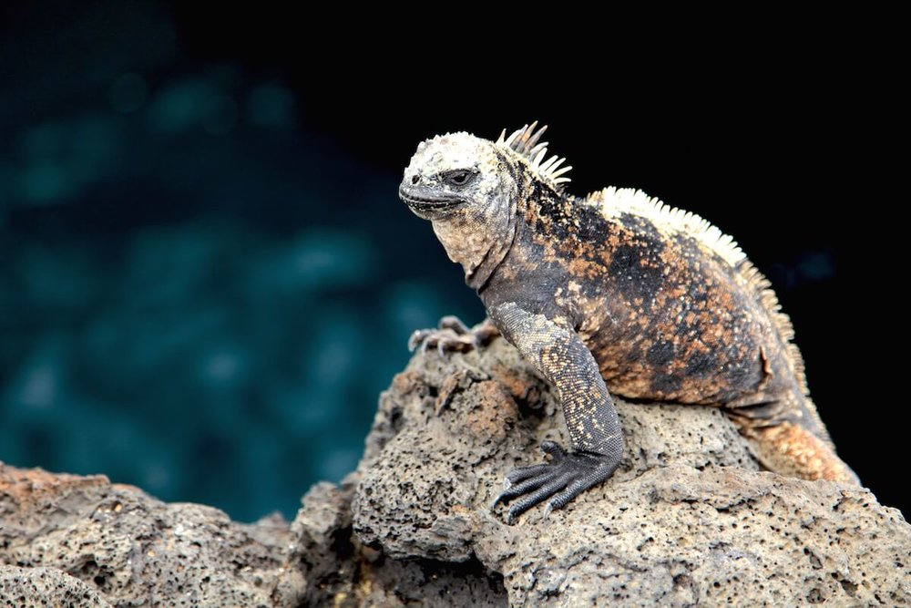 Galapagos UNESCO World Heritage Site