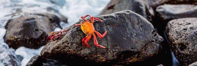 Galapagos Tour Itinerary