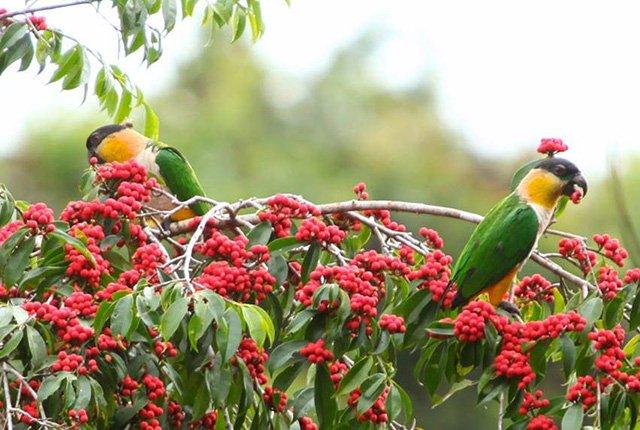 Amazon River Birding