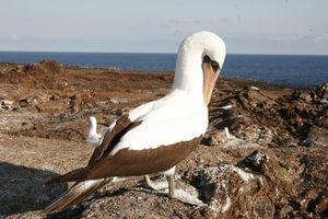 Galaxy II Galapagos Cruise
