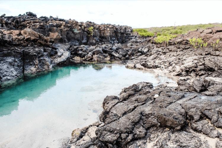 Petrel Galapagos Tours