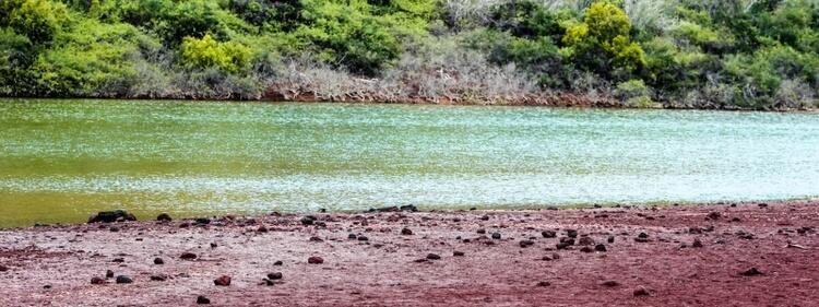 Rabida Islands Galapagos