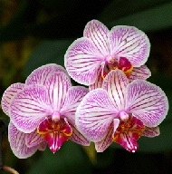 amazon rainforest plants. orchids amazon rainforest plants l