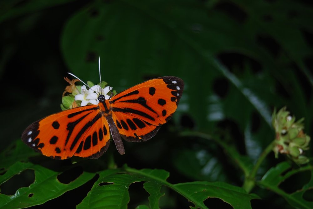Copy of Butterfly in the Amazon Rainforest