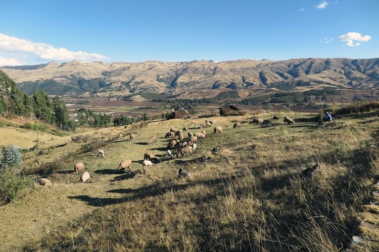 sacred valley peru tour