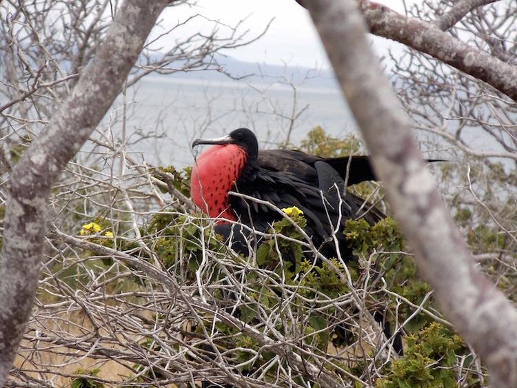 Galapagos Wildlife Calendar