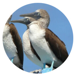 Pikaia Galapagos Testimonial