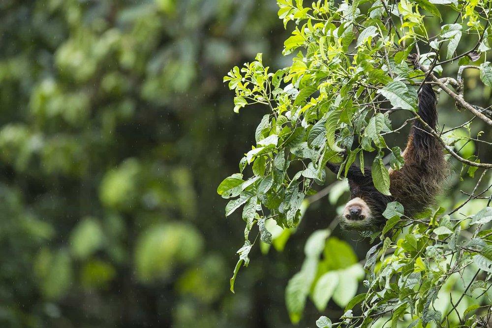 mashpi reserve monkey