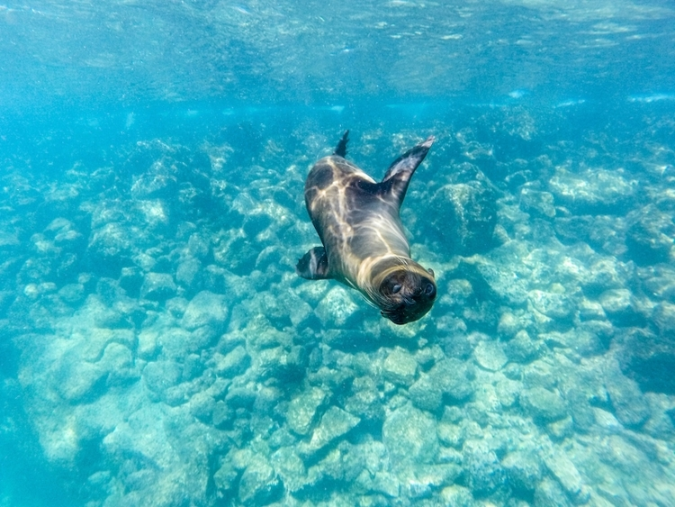 Snorkeling Galapagos