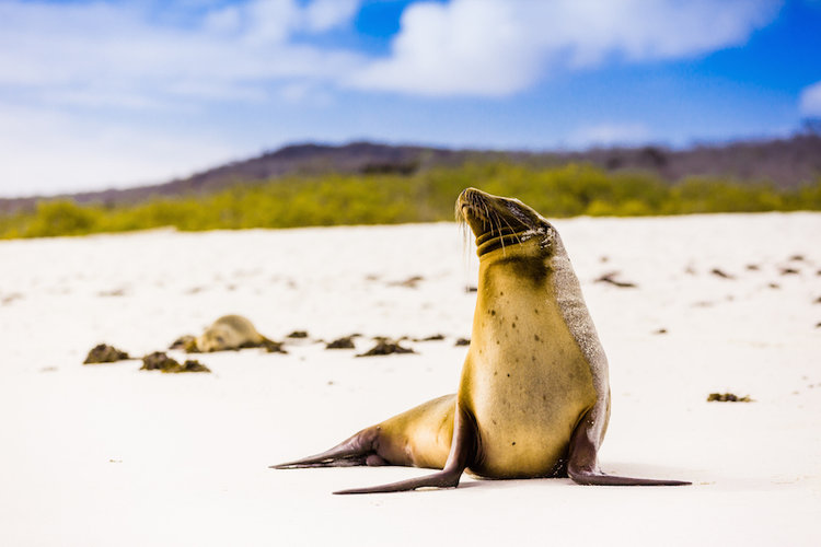 Galapagos Grace Cruise