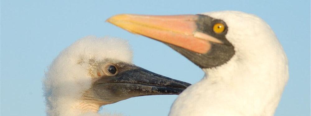 galapagos-birds.jpg