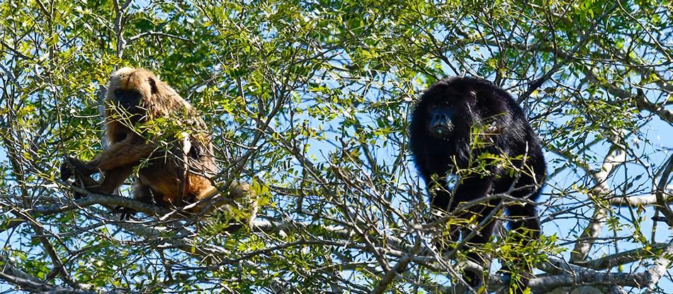 Cruise the Pantanal