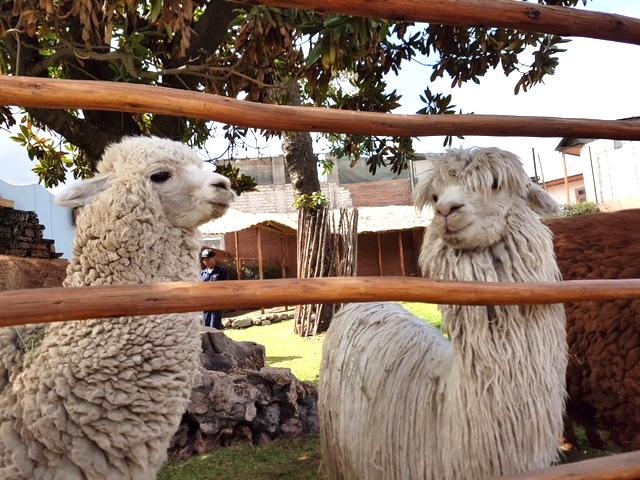 mundo alpaca
