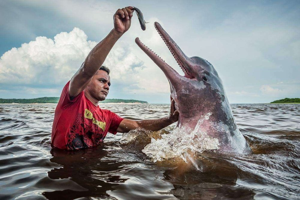 12-Pink Dolphin Rio Negro.jpeg