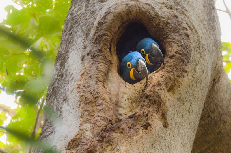 animals in Pantanal