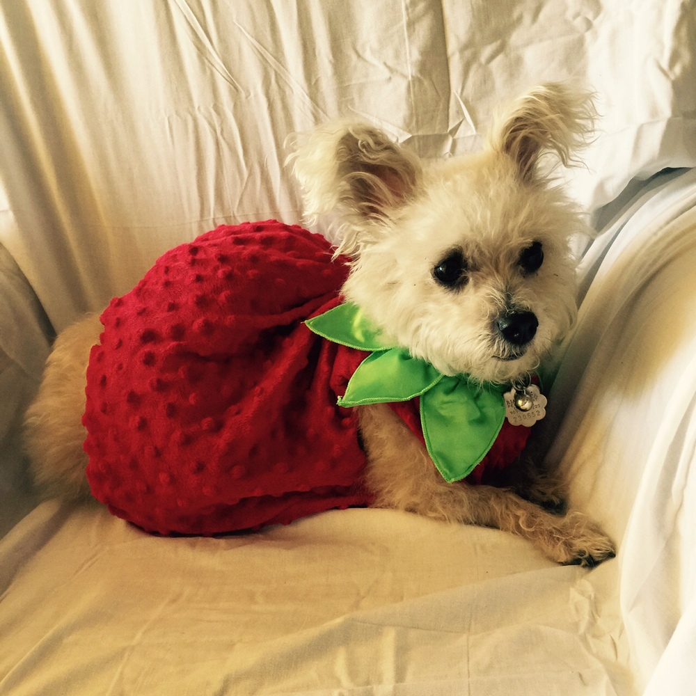 Dollie in her strawberry costume.