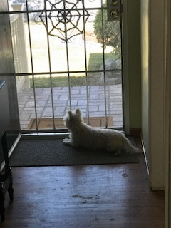 My retiree at her security post...watching