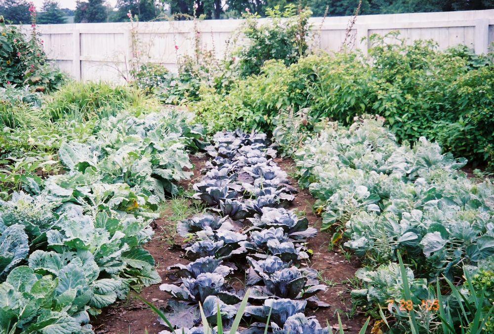 Justin Stelter Landscape Gardening - Carnton - 4149657260_12baf05d1d_o.jpg