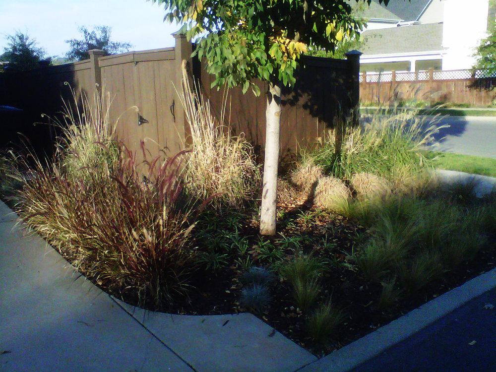 Justin Stelter Landscape Gardening - Modern Suburban Landscaping - 12591739543_cff1582131_o.jpg