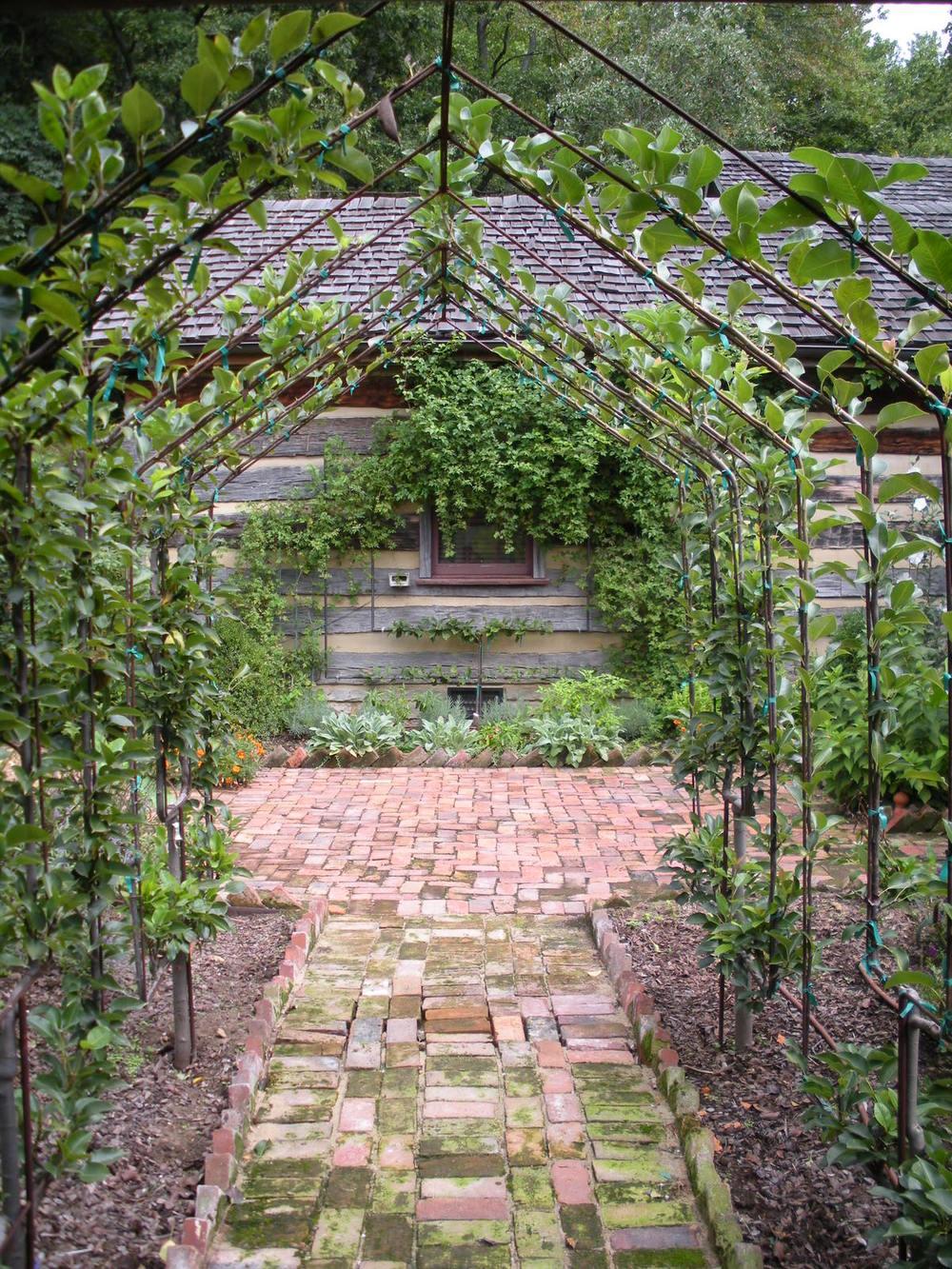 Justin Stelter Landscape Gardening - Espalier Installations - 2886248453_80e769320b_o.jpg