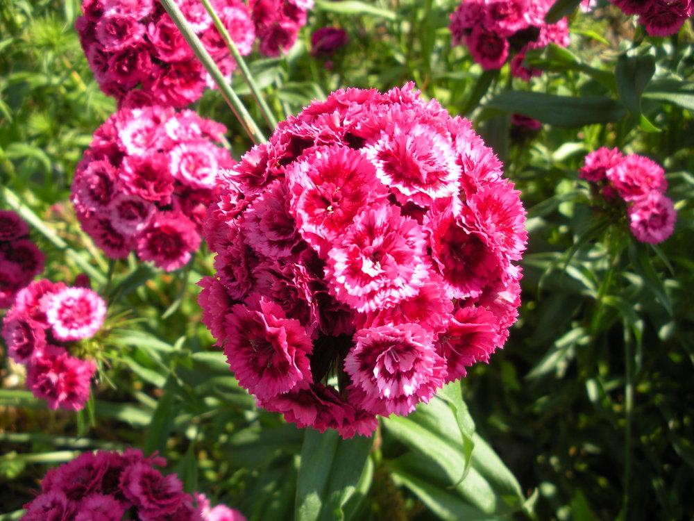 Carnton Garden 015.JPG