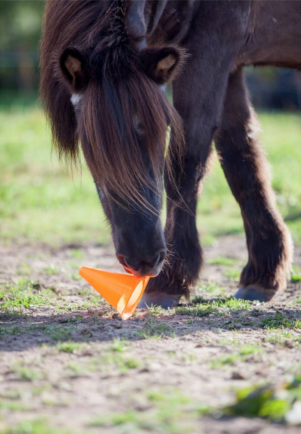 Paardadvies-Tessa-Denn-paarden-coaching-Myra-Wippler-7.jpg