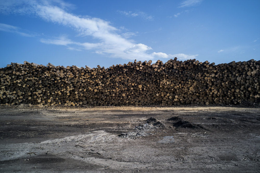 Chopped trees are stacked along the outside of a wood factory in Russia. (© Alicia Afshar)