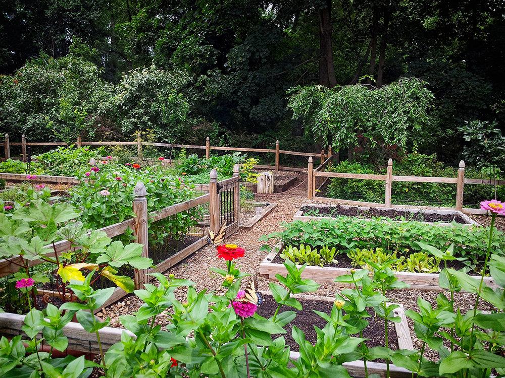 garden-20130724_140558-rev2.jpg