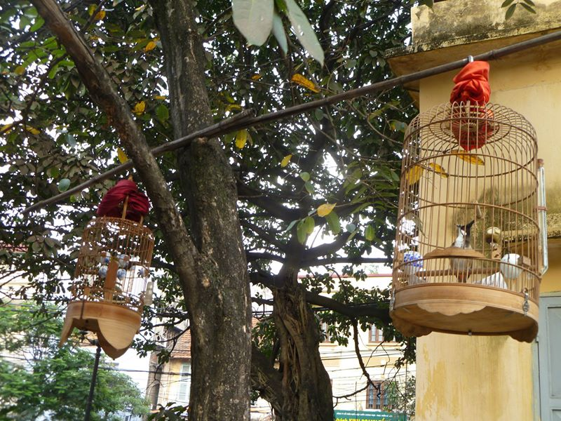 Birdcages of Hanoi
