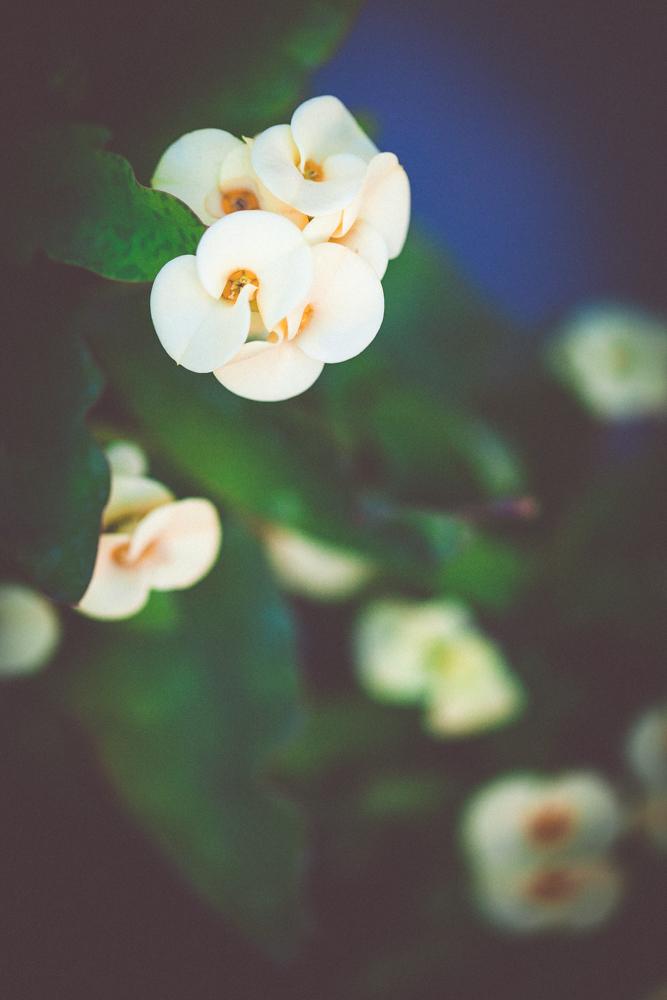 garden-22.jpg