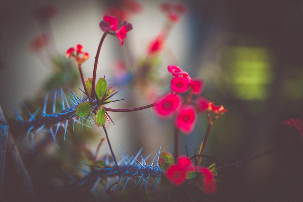 garden-21.jpg
