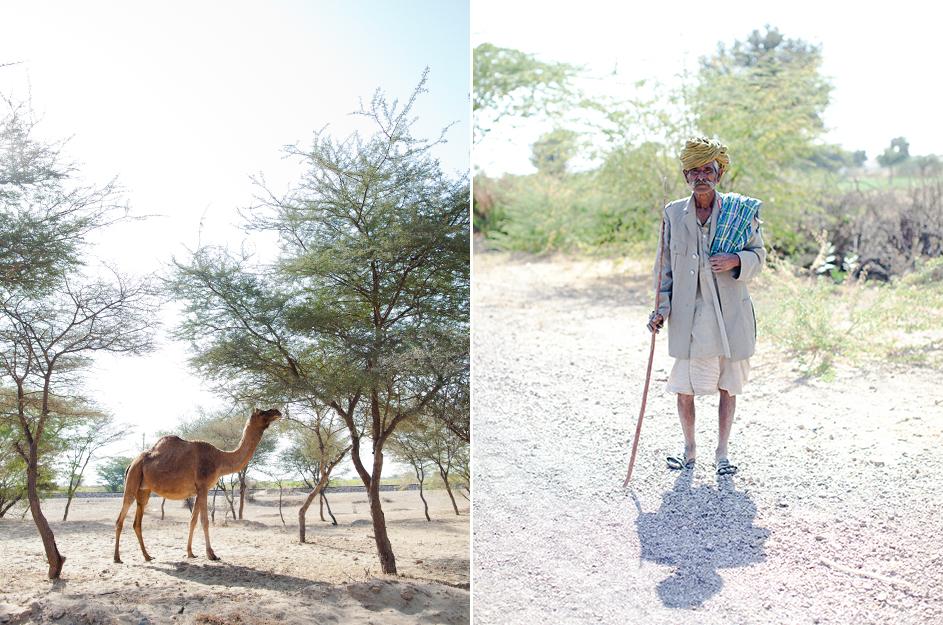 camel_1.jpg
