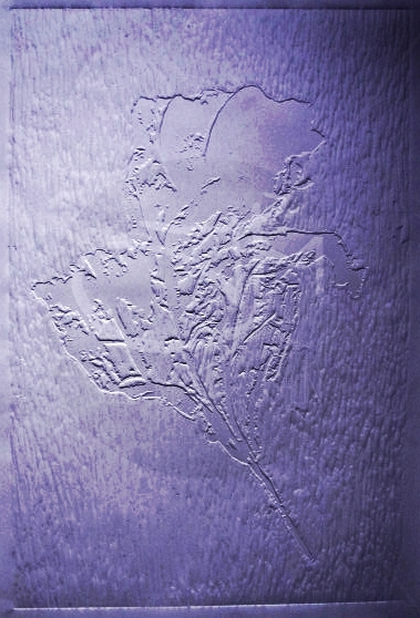 'Untitled' 2011