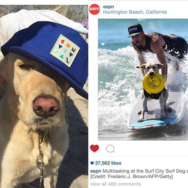 this casual dude @sirbakiofroth & his Pops @frothchronicles took the podium this weekend at the Surf City Dog Comp! 👏🏼🏆🐕🏄 #surfcitydog