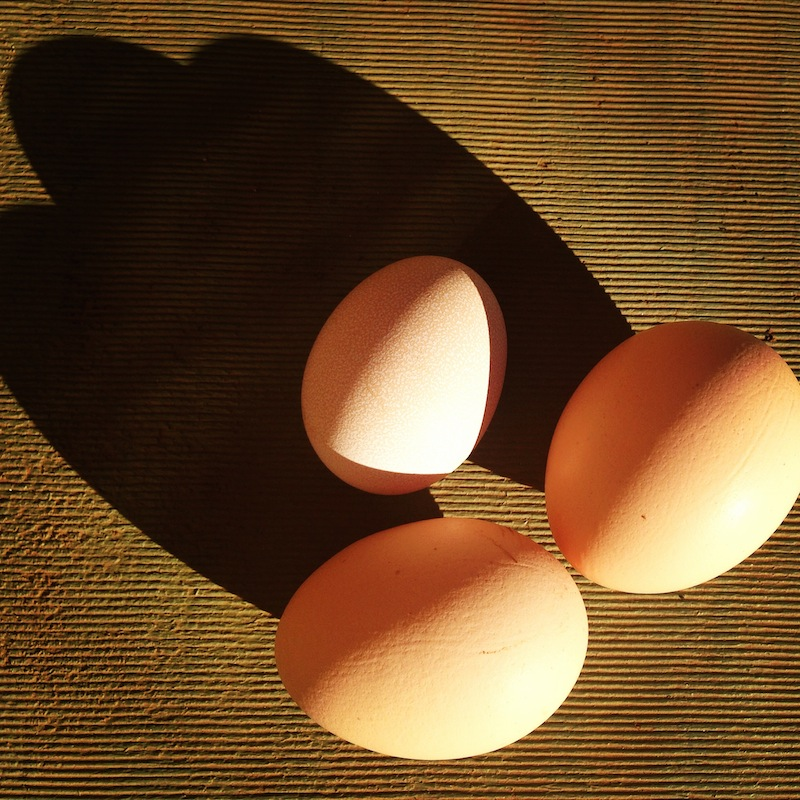 Back in the early days we received a manageable three eggs per day.