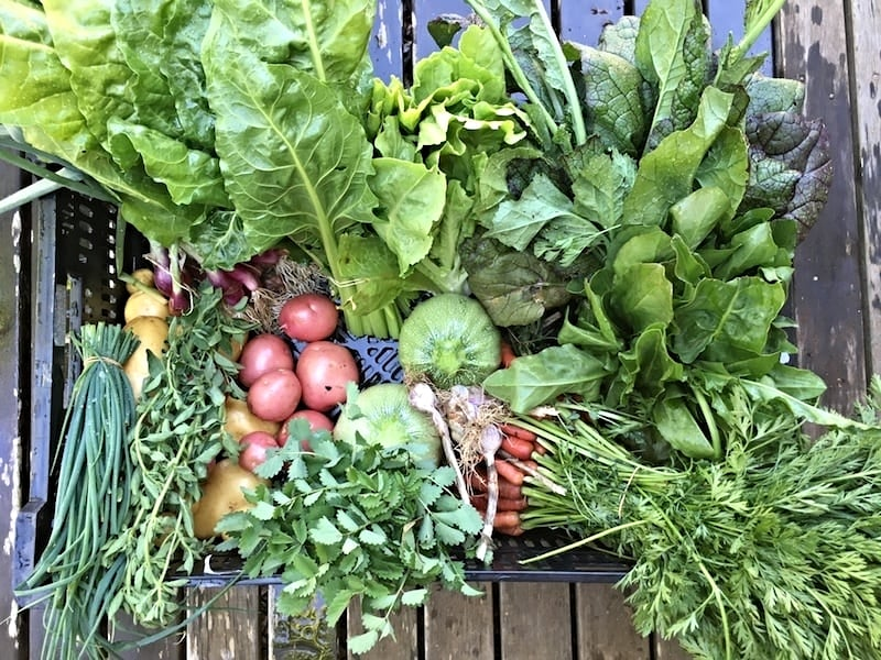 We've had very satisfying feedback about our weekly veggie boxes. One recipient said they have reinvigorated her love of cooking. She was getting so bored cooking the same things and now she's forced to mix it up with a new delivery of fresh seasonal veggies each week.