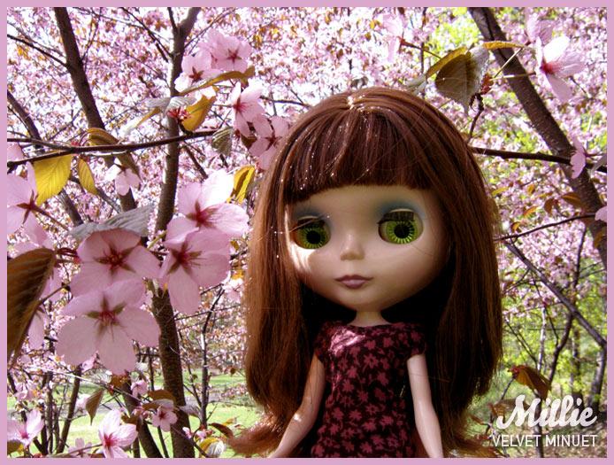 CherryMillie