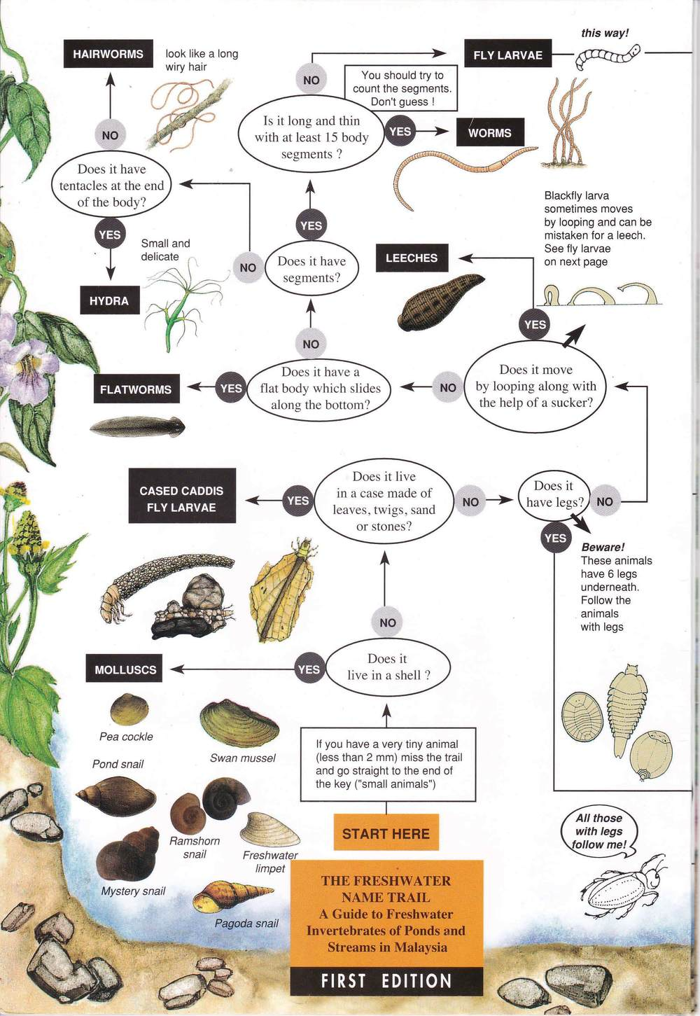 Freshwater Invertebrates 1_Page_1.jpg