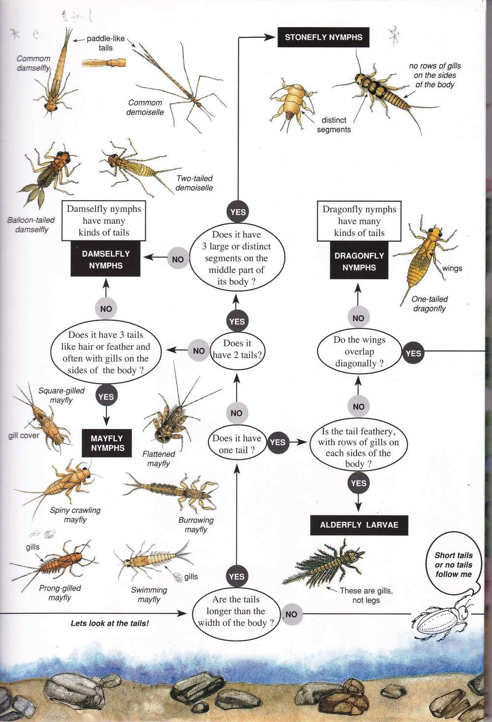 Freshwater Invertebrates 1_Page_3.jpg