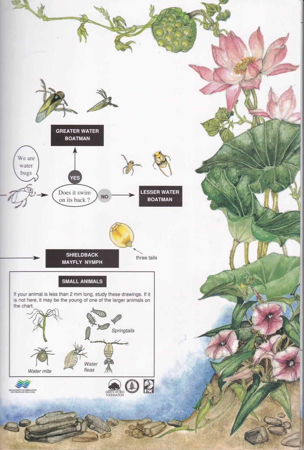 Freshwater Invertebrates 1_Page_5.jpg