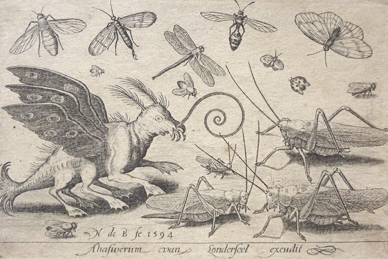 magictransistor :     Nicolaas de Bruyn. Volatilium Varii Generis Effigies. 1663.