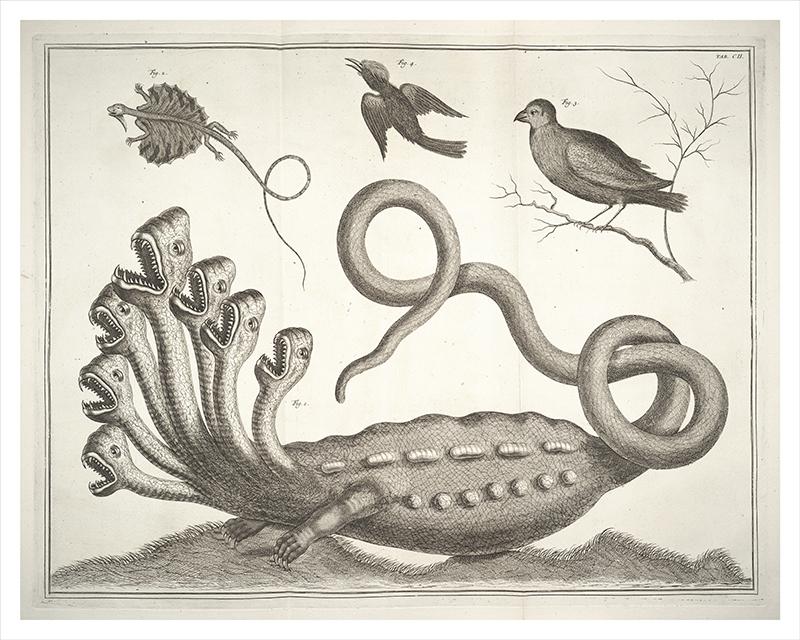Hydra: Beast of Revelation | Via  http://bit.ly/GXCJmk  #Research