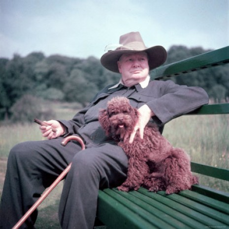 """Via.     """"Dogs look up to you. Cats look down on you. Give me a pig. He just looks you in the eye and treats you like an equal.""""  Churchill"""