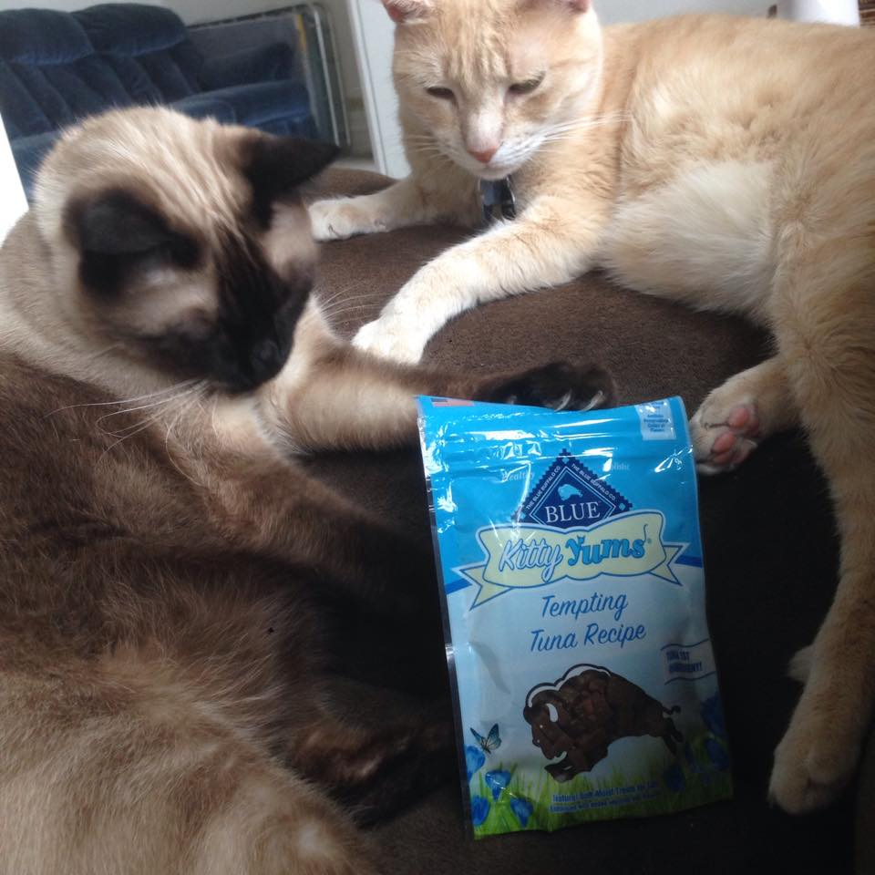 me and my friend even gave some Buffalo Blue Kitty Yums (which are Blue Bits for cats) and they loved them too and left me alone for a good while!
