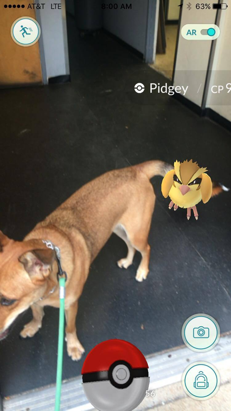 Bear still doesn't know what to think about these damn pidgeys!!!