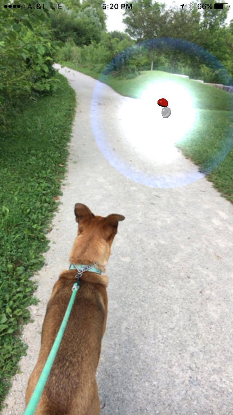 we always catch about 4-5 pokemon on our short little 10 minute walks to Forest Park.